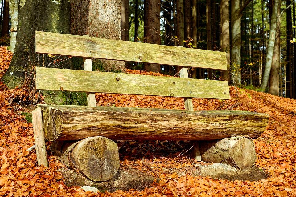 De ce ar putea fi mai sănătoşi orăşenii care locuiesc lângă o pădure